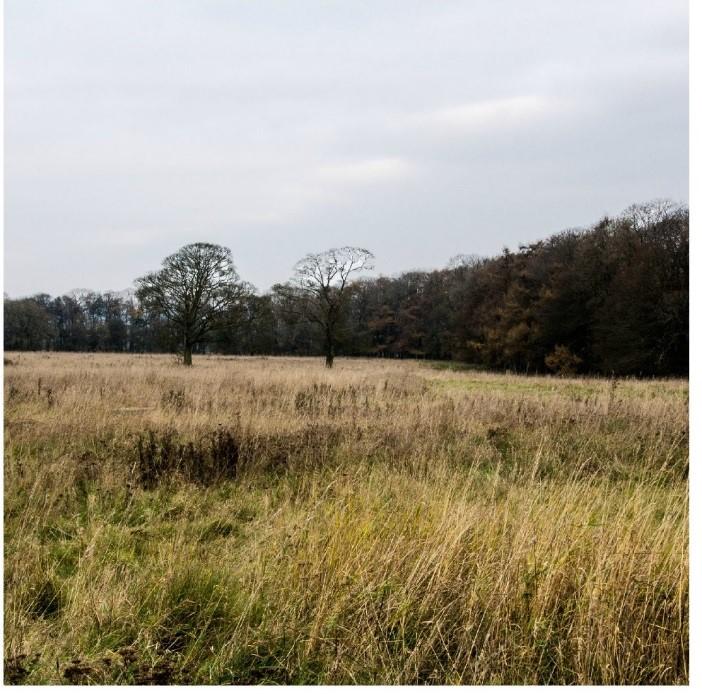 Colour image of local landscape on Borough Hill, Daventry.